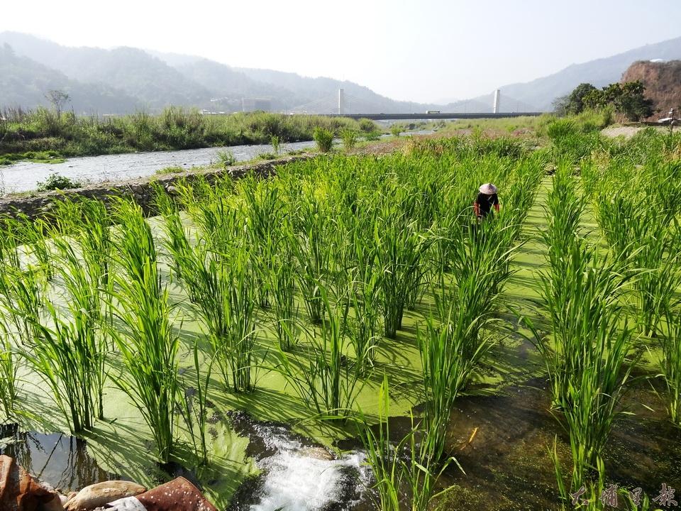 南港溪採生態工法 徵收土地避災 河川局:難以施行