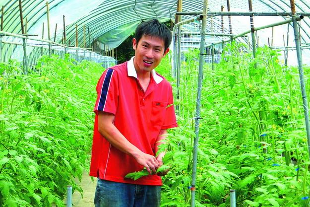 林仕閔以綠生農法守護一甲蕃茄園。(唐茹蘋攝