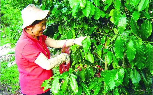 張文烈班長八十歲的岳母,專程從苗栗南下享受採豆樂。(張文烈提供)
