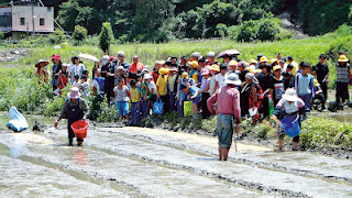 仁愛鄉松林部落種下香糯米,並讓親愛國小學童全程參與,藉此傳承傳統文化。(諾爾攝)