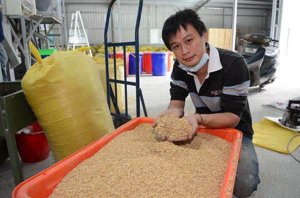 曾是竹科新貴的黃國峰,返回北港村種無毒稻米,並自行碾米。(柏原祥攝)
