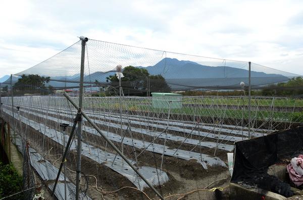 埔里常見農園裡架設防鳥網,這對野鳥生態有不利的影響。(柏原祥攝)