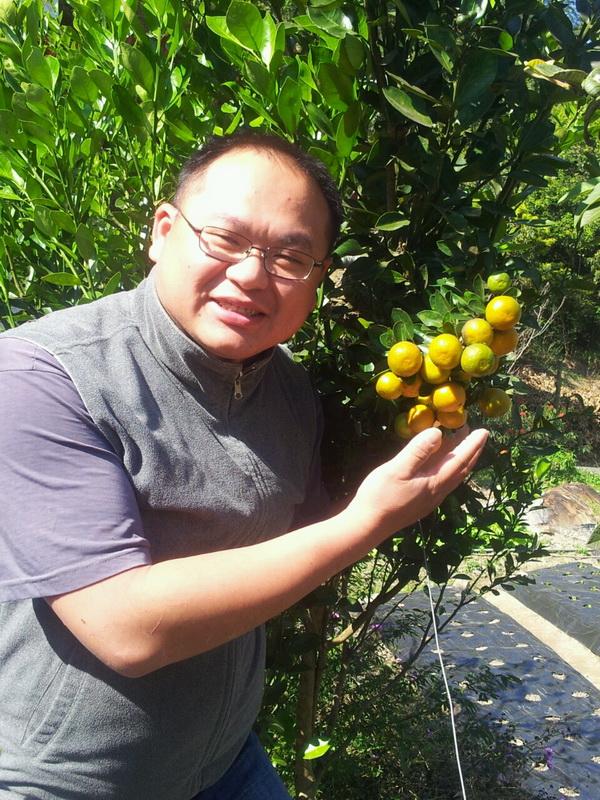 陳新豪自家農地裡的蔬果雖無噴灑農藥一樣長得很好。(唐茹蘋攝)