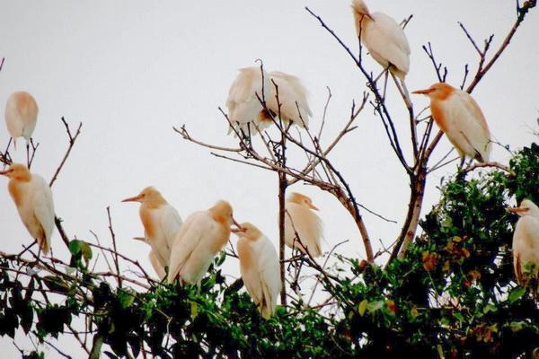 黃炳松所耕作的田地裡,常有成群白鷺鷥駐足。(圖/陳美維提供)