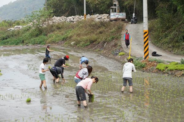 暨大同學們在內埔社區租農地,下田當農夫。