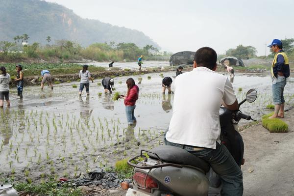 內埔社區農民看著暨大同學下田插秧。