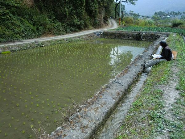 暨大研究生吳宗澤,在內埔種下一分田,並展開巡田的工作。