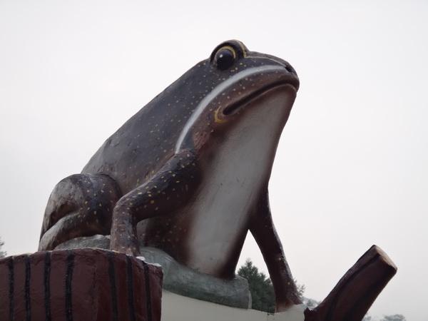 蓮華池位於五城社區,此地有豐富的蛙類,也成了五城國小藝術牆面的主角。(柏原祥攝)