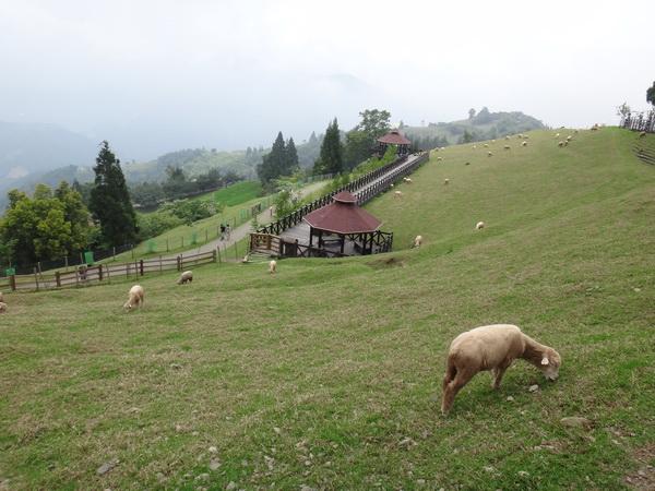 清境農場是南投縣熱門旅遊景點,每到假日塞車、停車位難求問題一再浮現。(柏原祥攝)