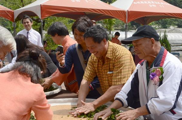 仁愛鄉農會舉辦高山茶王競賽,競賽現場將邀請遊客體驗手揉茶。(柏原祥攝)