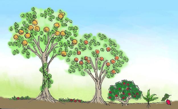 食物森林圖示。(繪圖∕吳孟音)