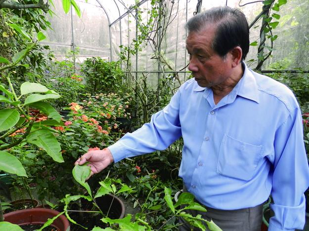 余文田從產業界退休後,自行打造網室,繼續與蝶為伍。