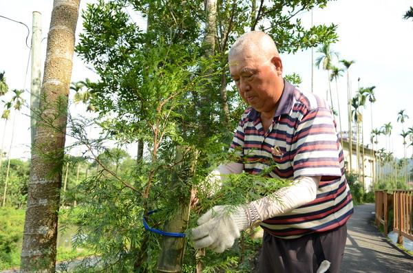 陳富源種樹十三年,在哲學步道、虎頭山登山步道種下千株肖楠。(柏原祥攝)