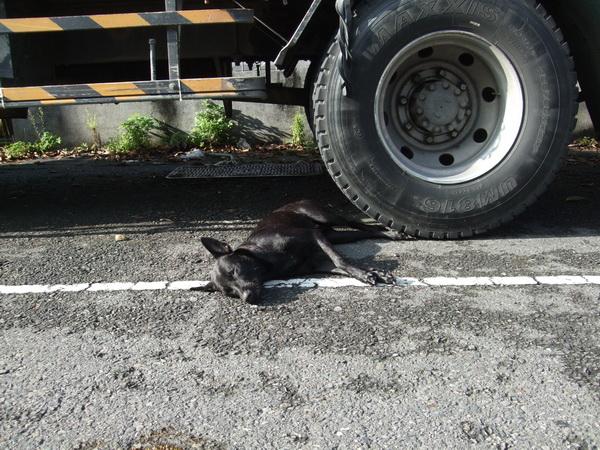 埔里鎮發生流浪狗暴斃的事件,警方懷疑有人因狂犬病恐慌而毒狗。(圖/警方提供)
