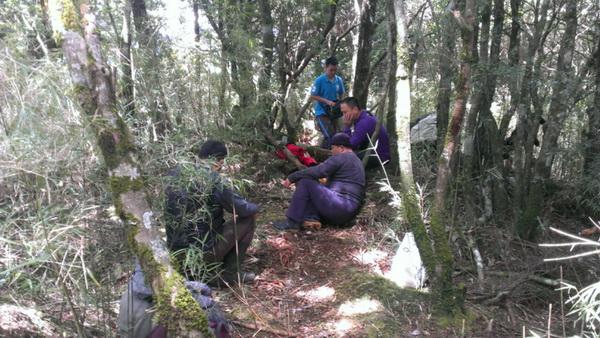 山老鼠,盜伐,林管處,紅檜,扁柏