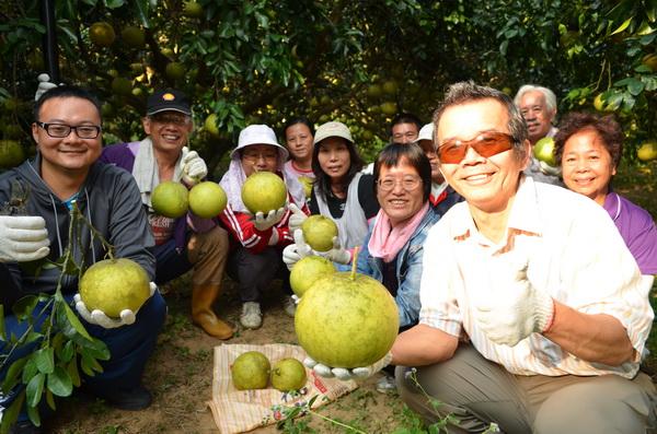 家扶志工採摘一個下午,約採了1200公斤大白柚,將用作義賣扶幼。(柏原祥攝)