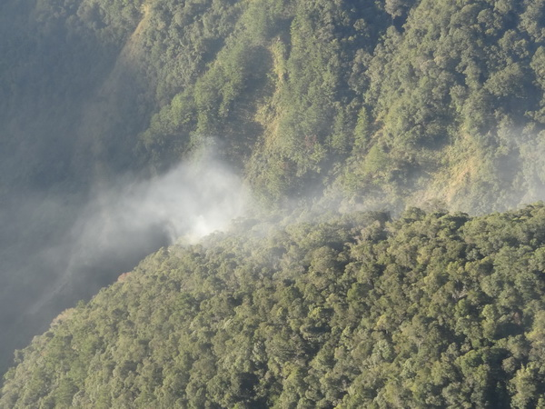仁愛鄉,森林火災,林管處
