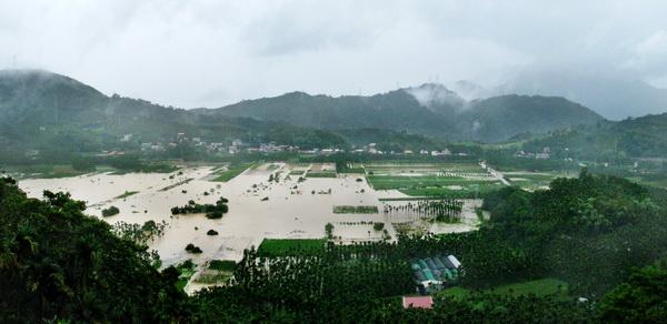 頭社活盆地非常容易淹水,還有地層下陷問題,連生命力強韌的檳榔也長得東倒西歪。(柏原祥攝)