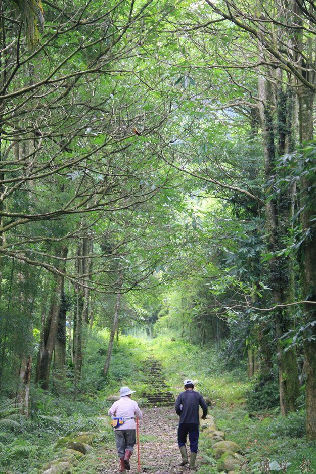 大林環嶺森林步道(黃彥文攝)