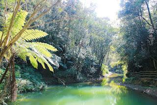 澀水森林水上步道景觀優美,道路平坦好走。(黃彥文攝)