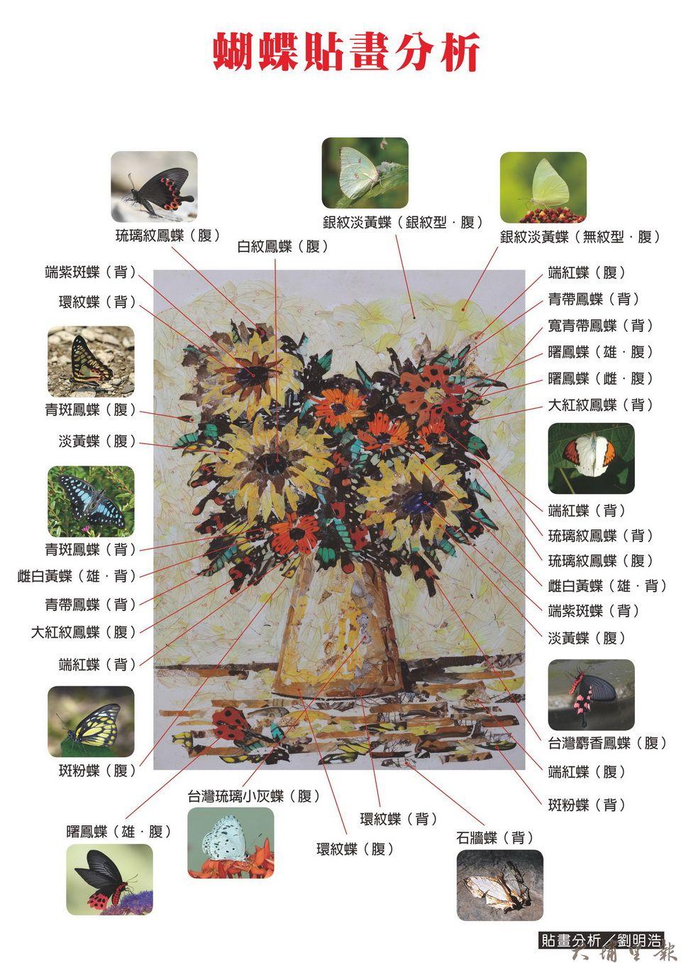 蝴蝶貼畫由無數蝴蝶生命所構築成,你能分辨出哪幾種呢。(貼畫分析/劉明浩)