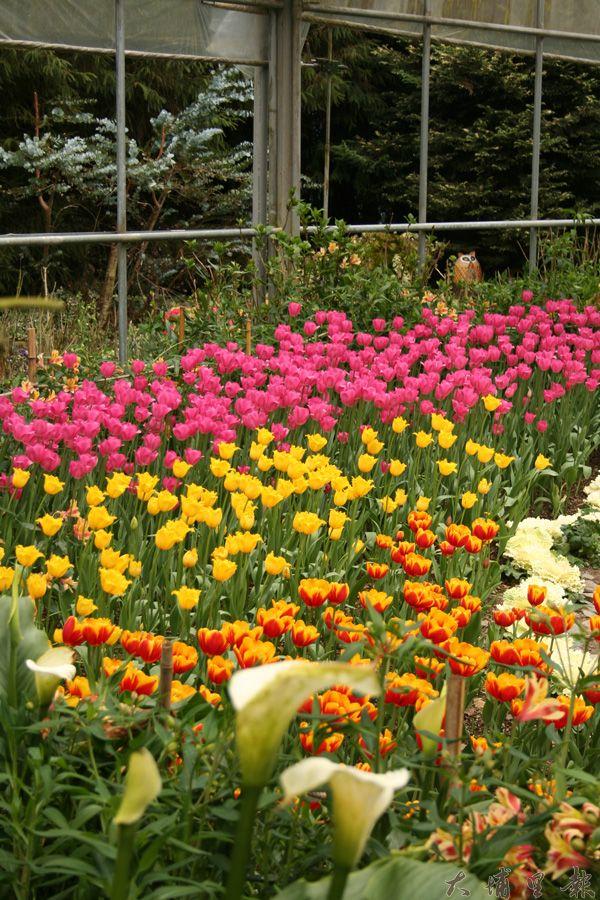 台大梅峰農場春天百花盛開,美不勝收。(台大實驗農場提供)