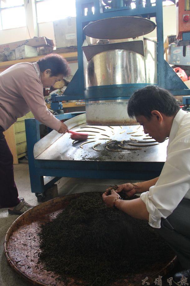日月潭紅茶春茶採 收製作,茶師揉捻製作。(黃彥文攝)