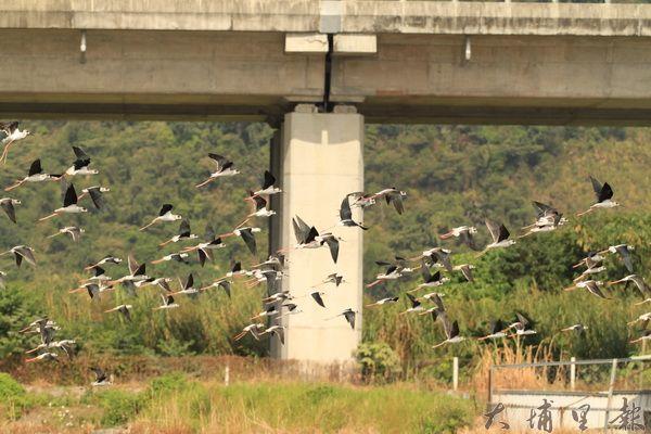 埔里公田溝區域是很好的賞鳥聖地。(林瓊瓔攝)