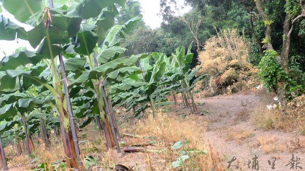 不忍心 農藥戕害土地與農人