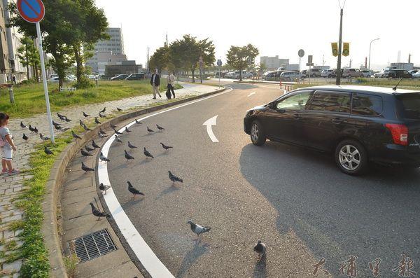 日本人行道