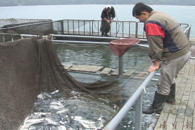 日月潭箱網養殖漁業(王俞哲攝)