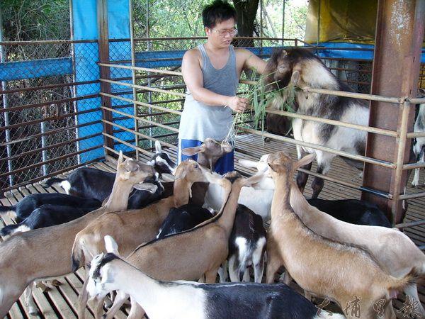 牧佳牧場老闆王志玄用心經營,羊奶不添加防腐劑,消費者使用更安心(唐茹蘋攝)。