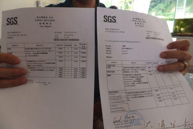 澄風大閘蟹通過SGS檢驗合格。(唐茹蘋攝)