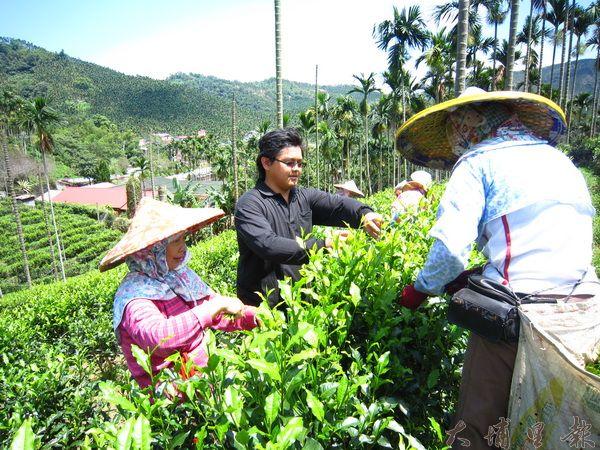 黃巖淇(茂松)小心檢視茶葉與採茶阿嬤一同採茶。(林子婷攝)