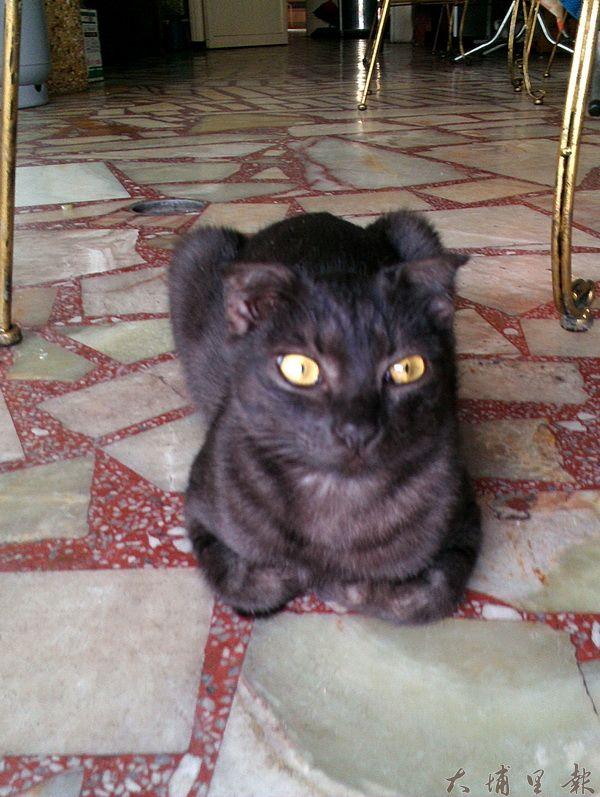 清寶鹹油條黑貓