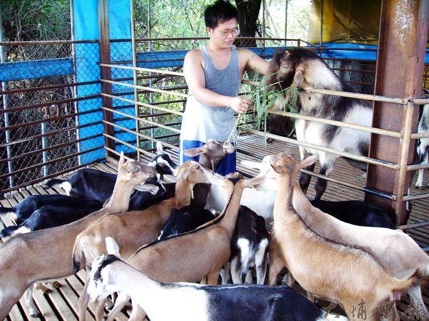 魚池鄉牧佳牧場在地鮮羊乳