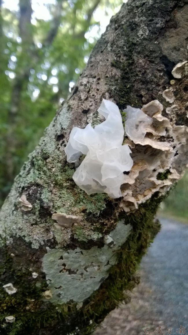 真菌是大自然的分解者。