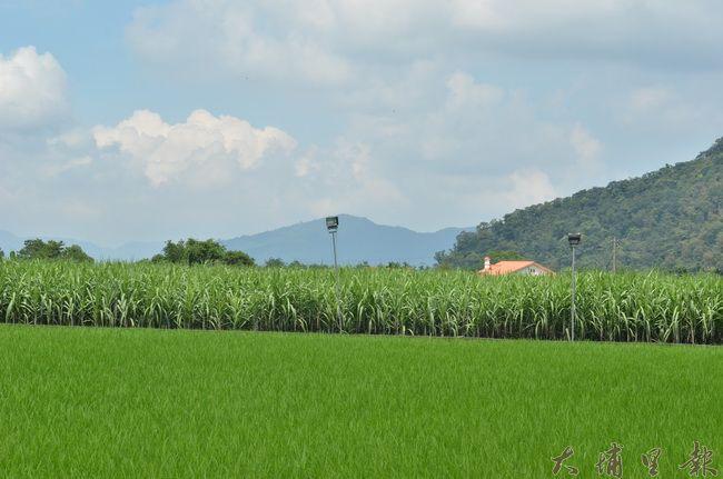 埔里鎮內埔農業區農地,曾因「多喝水」擴廠事件,引發農地不農用的爭議。(柏原祥攝)