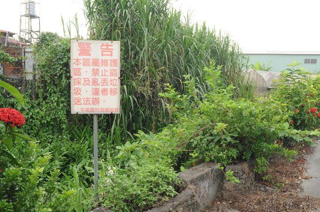 牛尾社區野薑花步道設立警示牌,禁止盜採,卻仍有採花賊視而不見。(柏原祥攝)
