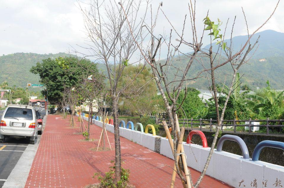 埔里鎮公所在南安路地母廟牌樓附近新植的櫻花現況。(柏原祥攝)