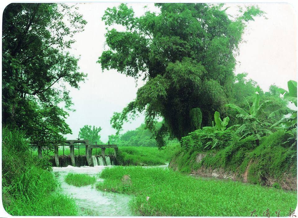 杷城排洪道的前身是大潭仔,是古早埔里囝仔最愛的戲水天堂。(圖/引用自埔里影像故事館)