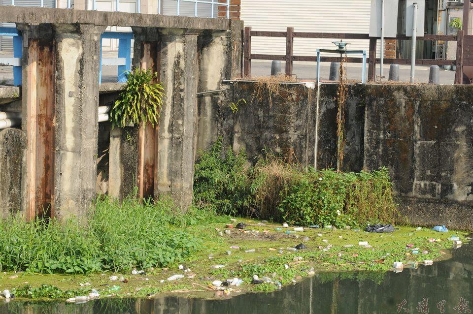 現今的杷城排洪道,水門附近的緩流,漂浮著各式各樣的垃圾。(柏原祥攝)