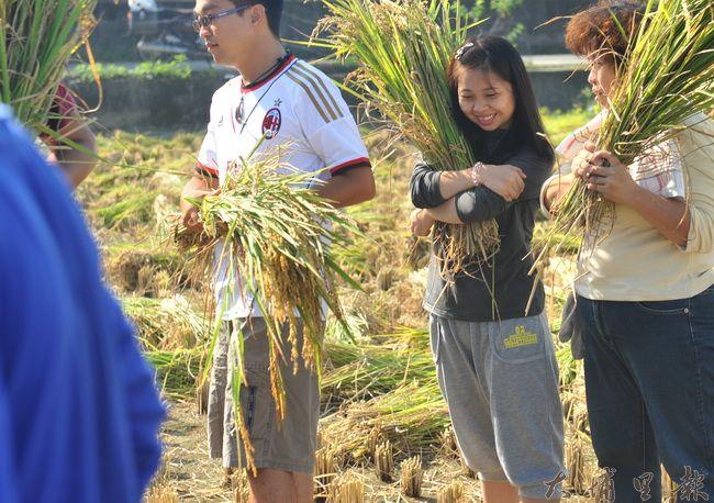 環抱剛收割的稻穗,參與籃城公田收割的女子露出滿足的笑容。(柏原祥攝)