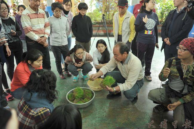 埔里鎮籃城社區公田舉辦插秧活動,插秧之前發放秧片,並學習農作知識。(柏原祥攝)