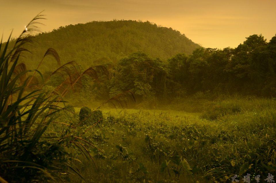 草湳溼地是埔里地區指標性的螢火蟲棲地,但因鄰近農地大面積開發,螢火蟲季因而停辦。(柏原祥攝)