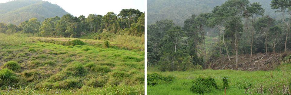 左側照片是未開發前的草湳溼地,右側照片是鄰近農地開發的草湳溼地,可見到大面積雜木被剷除。(柏原祥攝)