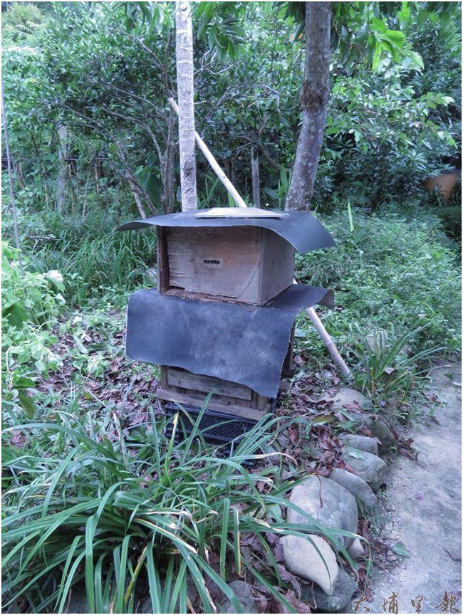 為了方便「野蜂」的駐留,成功社區許多民戶會在屋外擺設「蜂箱」,等待蜂群「不請自來」,留下端午時節可作採收的可口野蜂蜜。(李休睏攝)