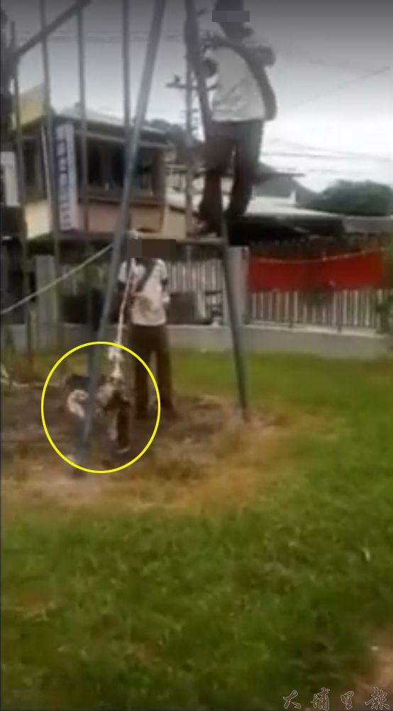 畫面顯示鳥兒後來先被繩子綁著,倒吊在校園欄杆上。(截自南投人聊天室臉書社團)