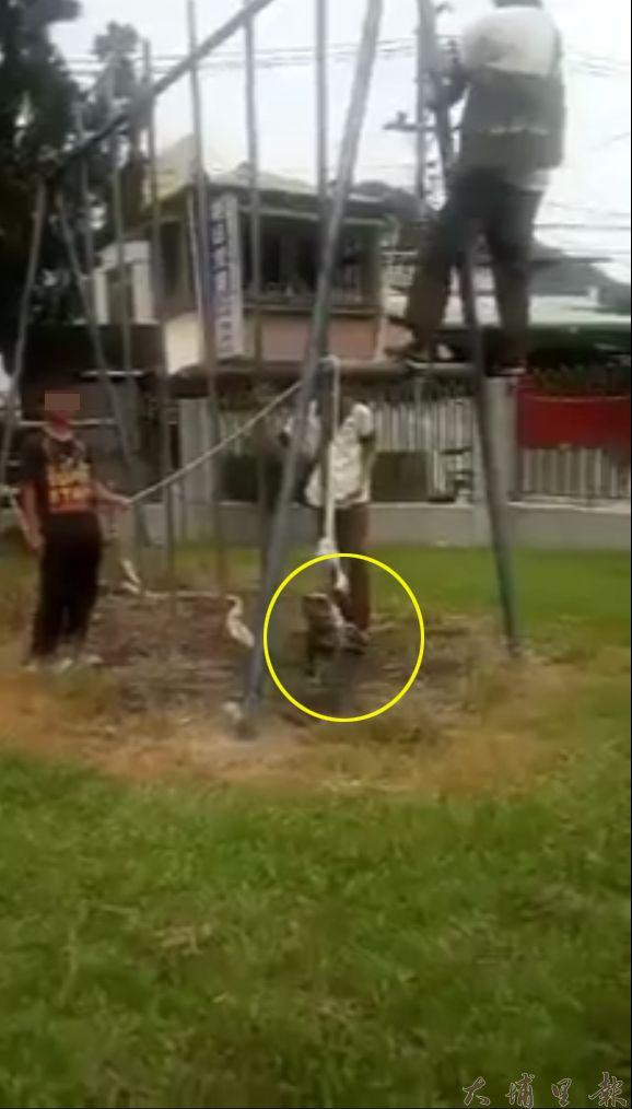 虐鳥國中生將黑冠麻鷺亞成鳥吊在欄杆上,一旁學生還起鬨「上吊上吊」。(截自南投人聊天室臉書社團)