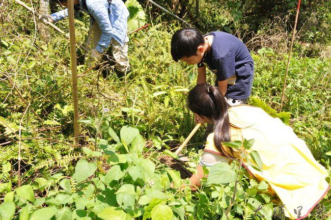 臺灣山林復育協會、福智慈心基金會在國姓鄉64林班地檳榔園中種下台灣原生種樹苗,參與種樹的團員中有小朋友。(柏原祥攝)
